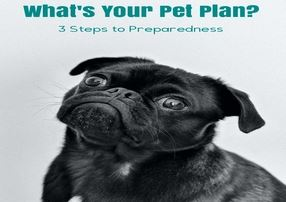 What&#39s Your Pet Plan